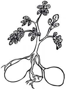 plant zombie coloring pages