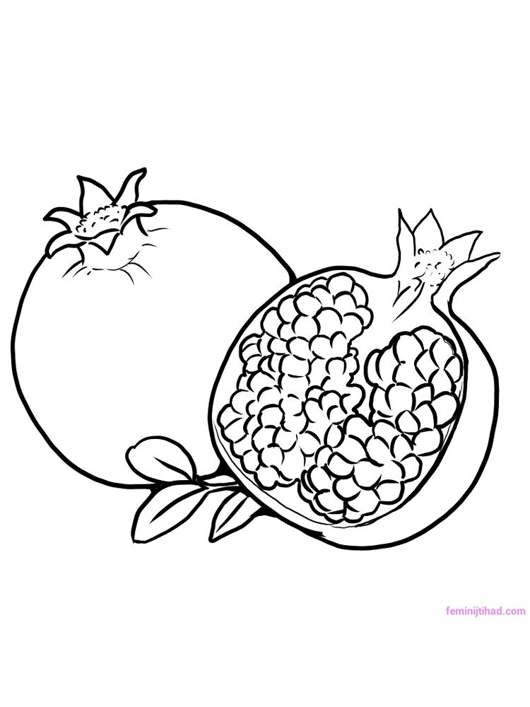 pomegranate coloring image