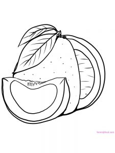pomelo coloring pict