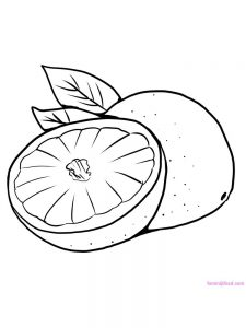 pomelo coloring sheet