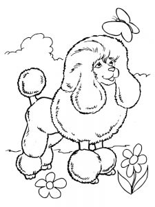 poodle coloring pages pdf