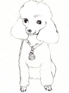 poodle coloring pages pdf print