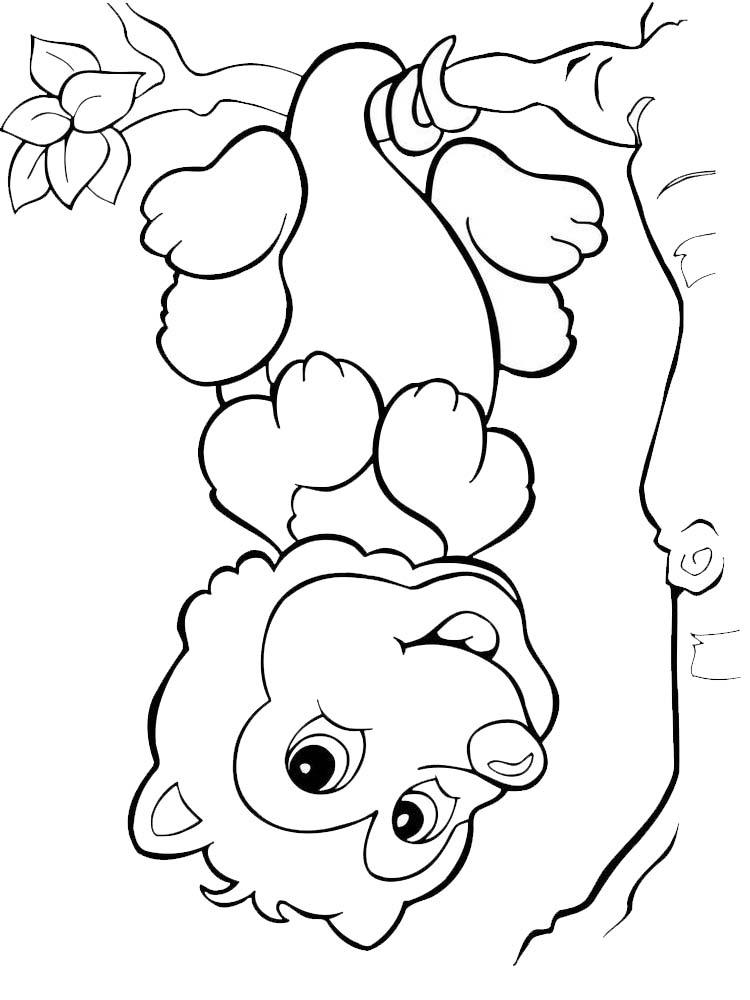 possum coloring pages free