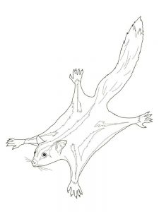 possum coloring pages print