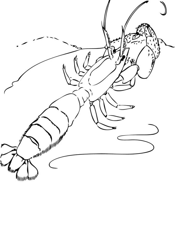 prawn coloring pages free
