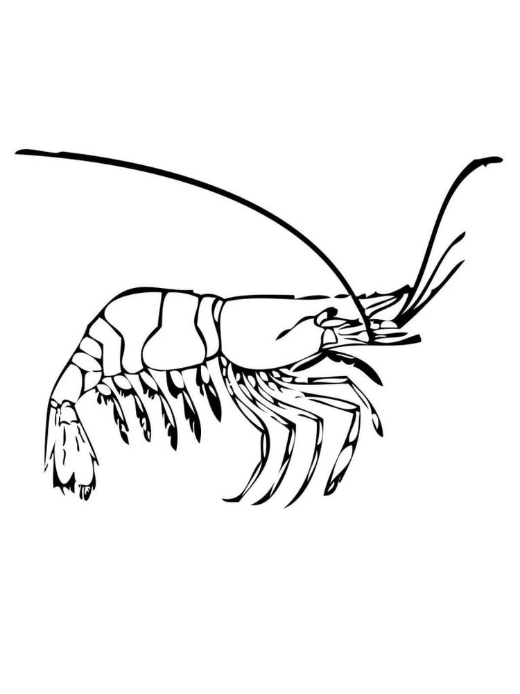 prawn coloring pages image