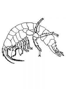 prawn coloring pages print