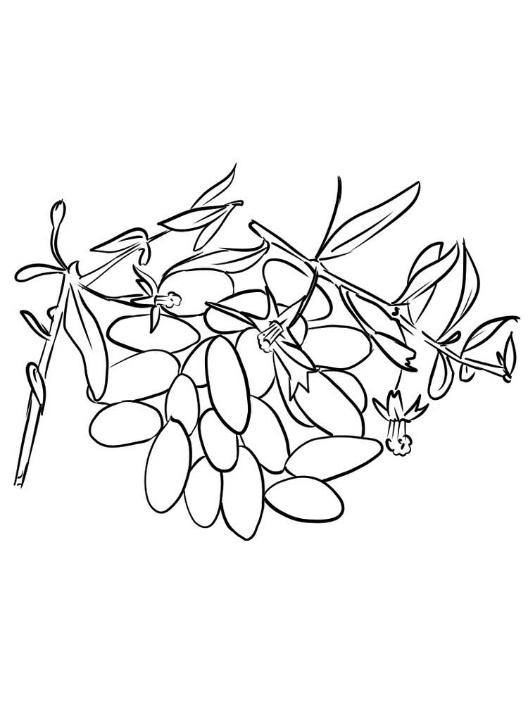 print goji berries coloring picture free