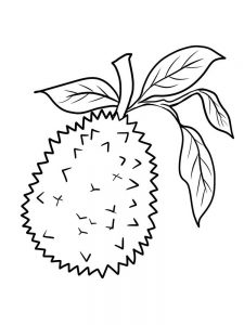 printable durian coloring sheet