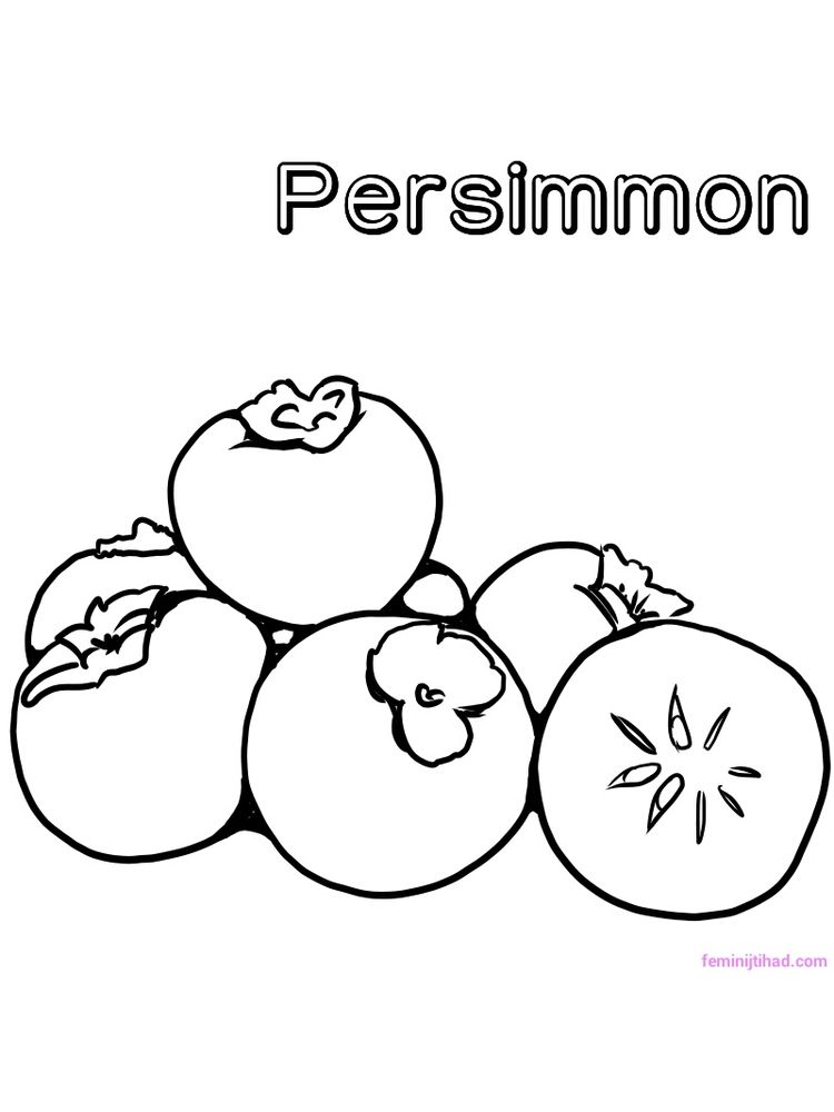 printable persimmon coloring page print