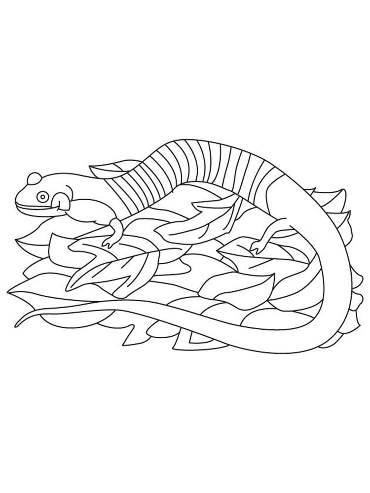 printable salamander coloring pages
