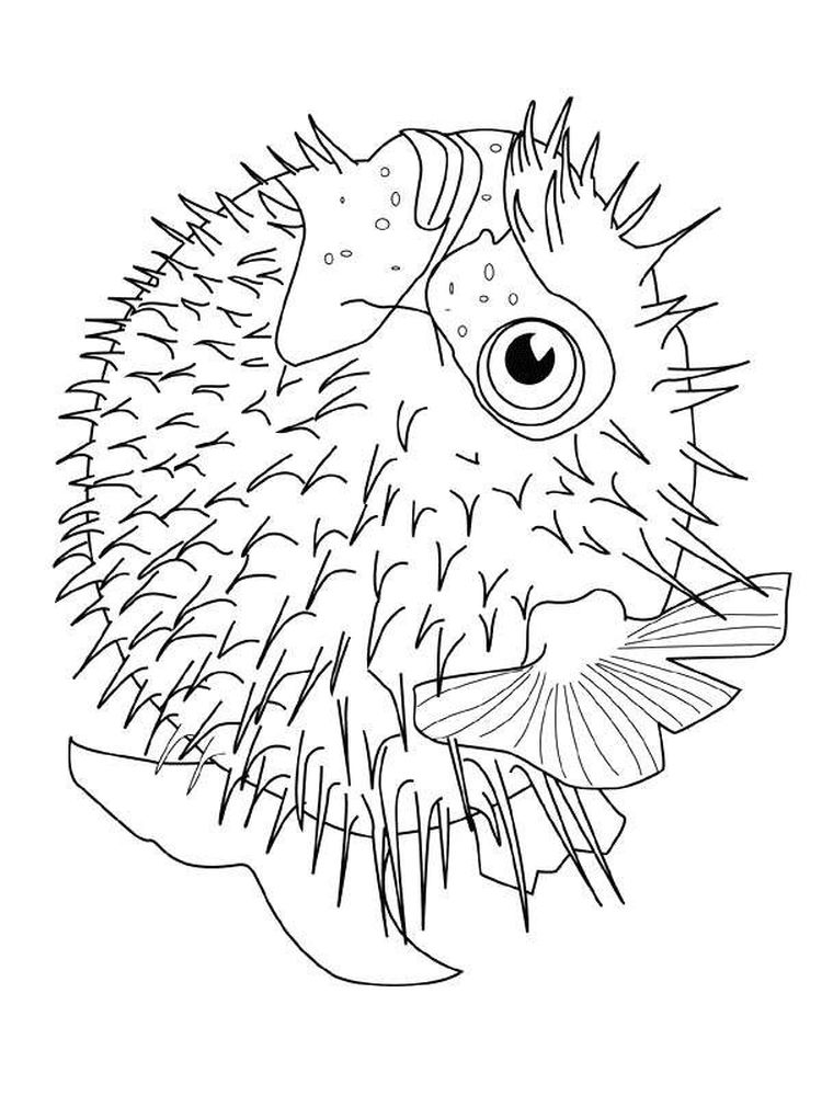 puffer fish coloring pages free