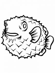 puffer fish coloring pages image