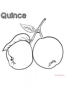 quince coloring image