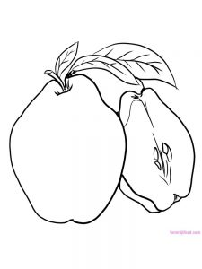 quince coloring page download