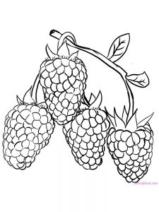 raspberry coloring page download