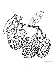 raspberry coloring pages