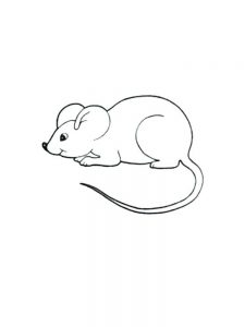 rat coloring pages print