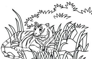 realistic tiger coloring page