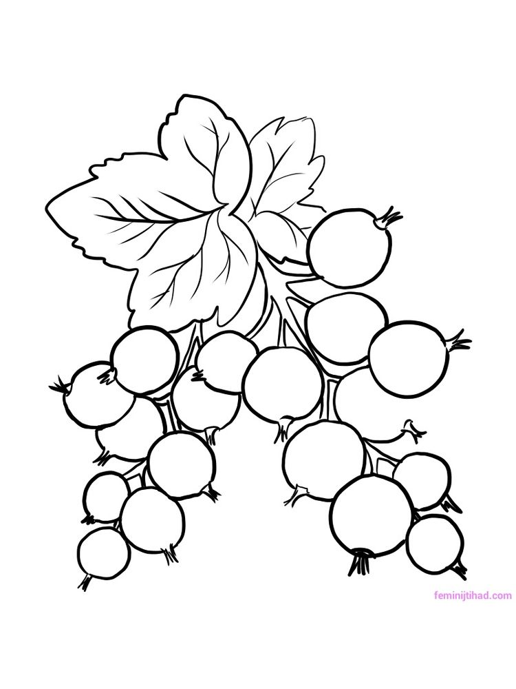 red currant coloring page