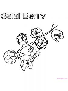 salal berry coloring page