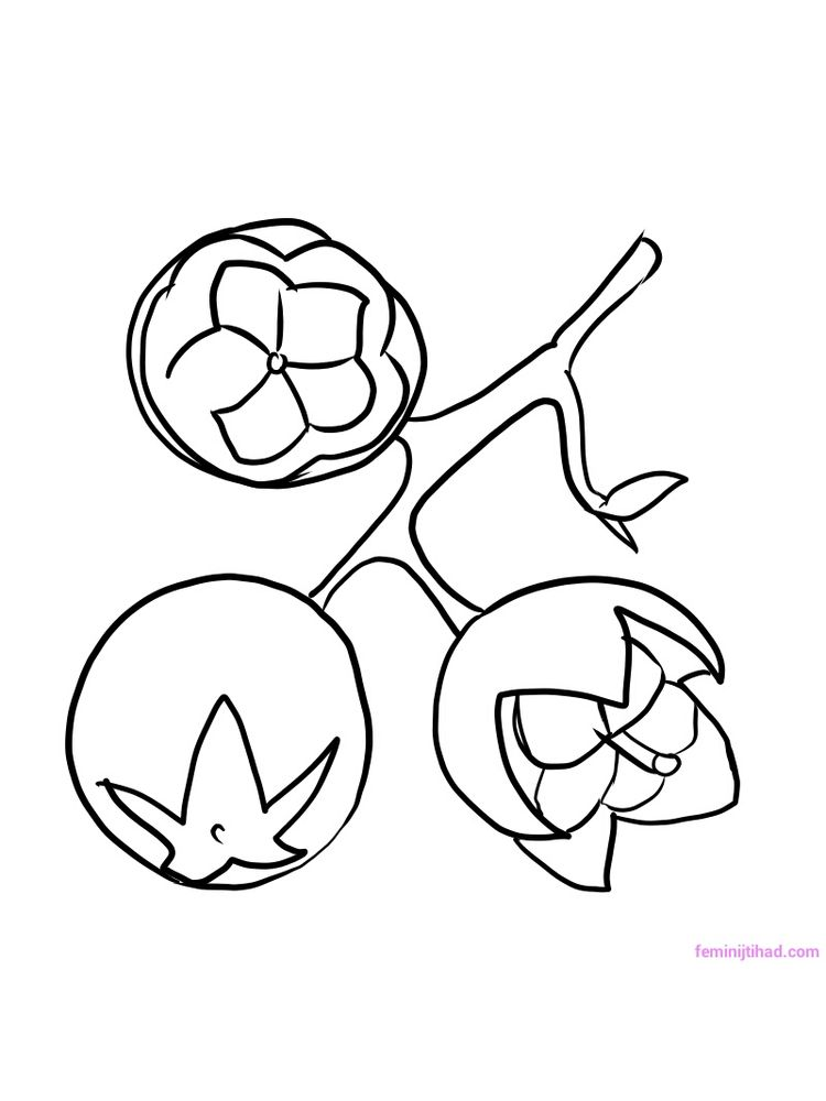salal berry coloring pages