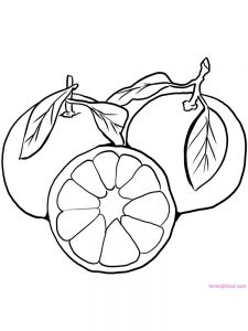 satsuma coloring pages