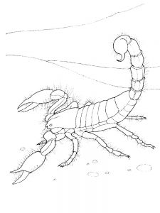 scorpion coloring pages image