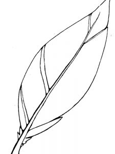 simple feather coloring page