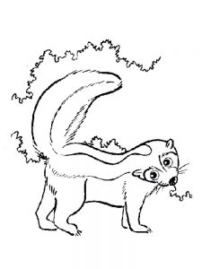 skunk coloring pages download