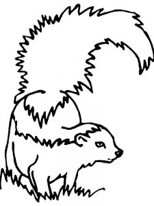 skunk coloring pages free