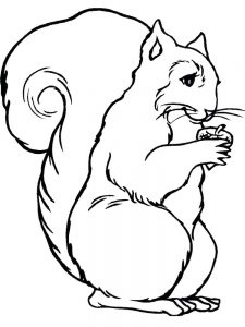 skunk coloring pages free printable