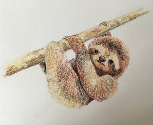 sloth coloring