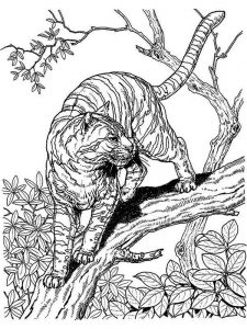 tiger hard image coloring pages