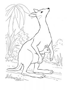 tree kangaroo coloring page