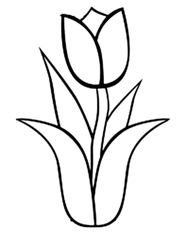 tulip coloring book pages