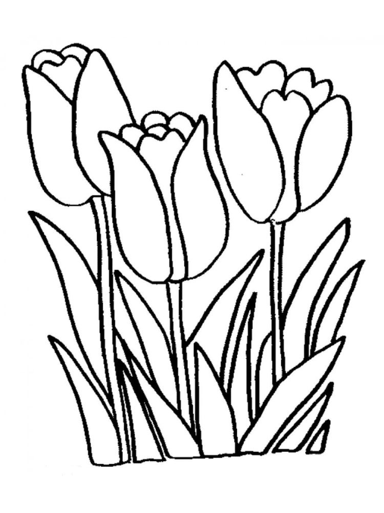 tulip coloring pages for adults