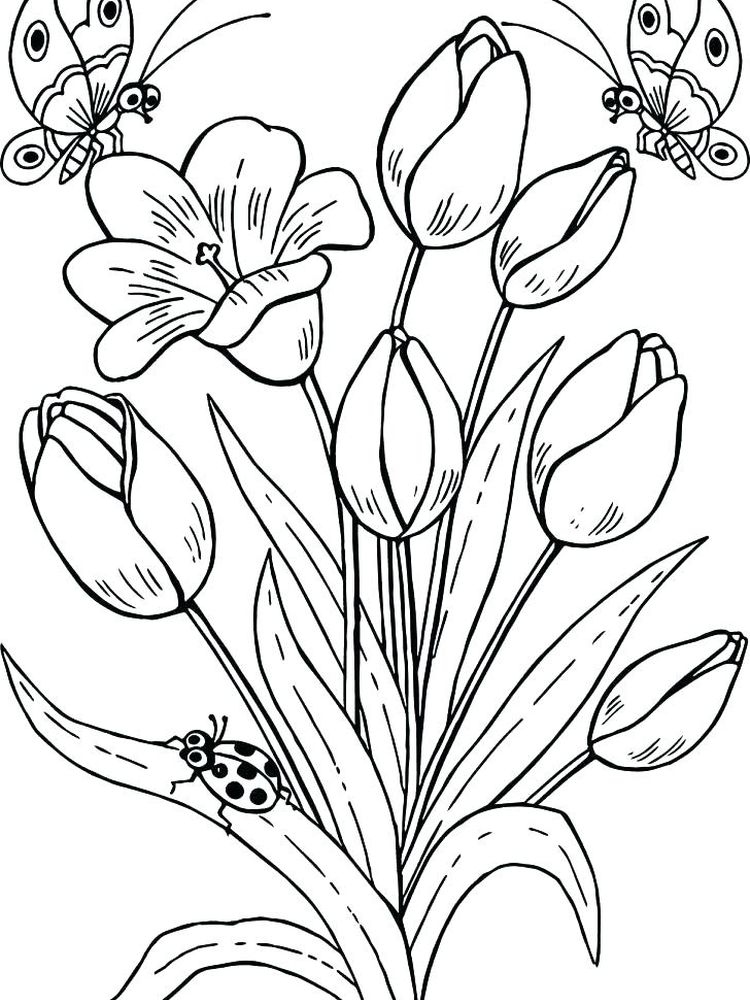 tulip coloring pages pdf