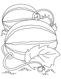 watermelon plant coloring page watermelon fruit