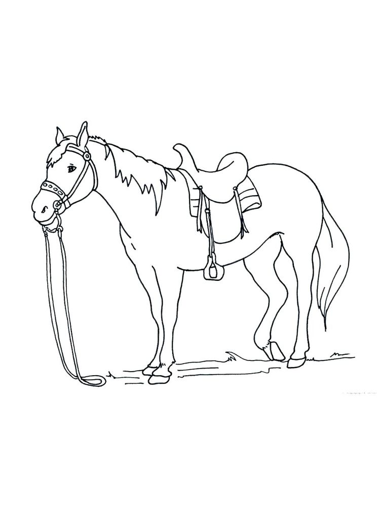 wild horse coloring page image