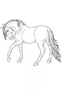 wild horse coloring pages book