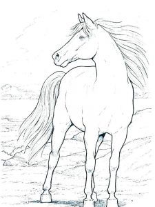 wild horse coloring pages free printable