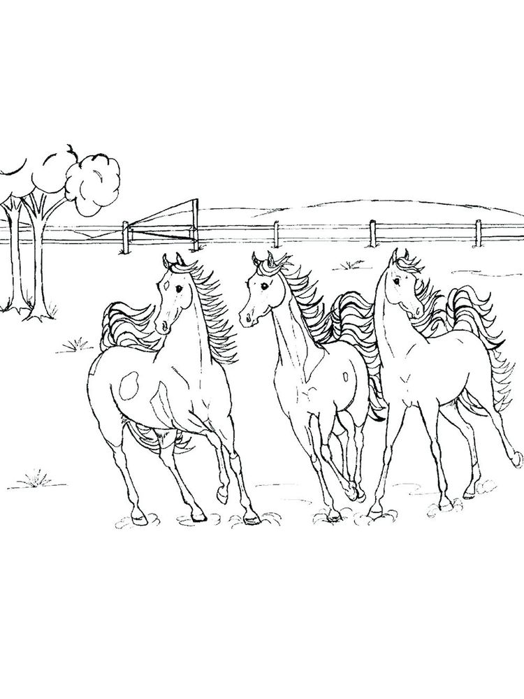 wild horse coloring pages image download