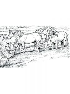 wild horse coloring pages image printable