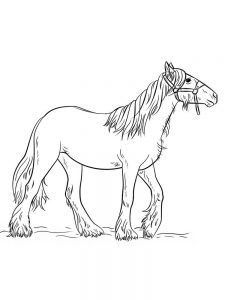 wild horse coloring pages pict
