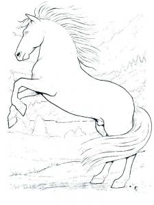 wild horse coloring pages picture