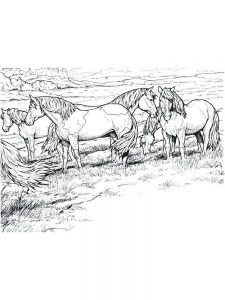 wild horse coloring pages printable