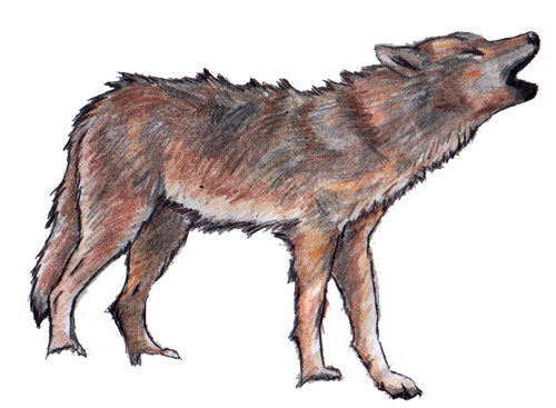wolves coloring